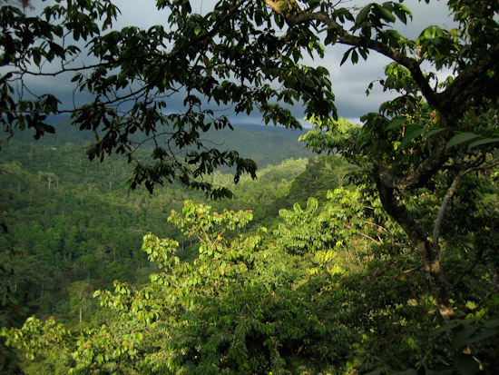 The lush green jungle of the Guatemalan countryside.